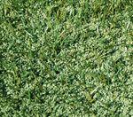 緑色の樹脂チップ・エコフィル